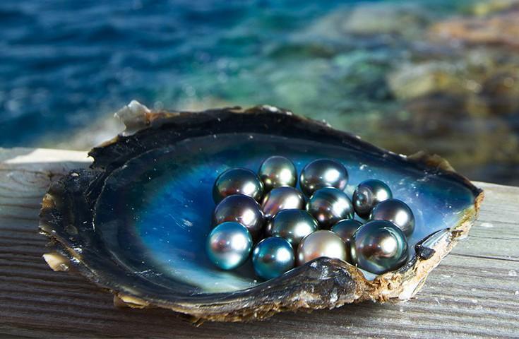 谁说黑珍珠只有黑色?明明是生活中行走的彩虹